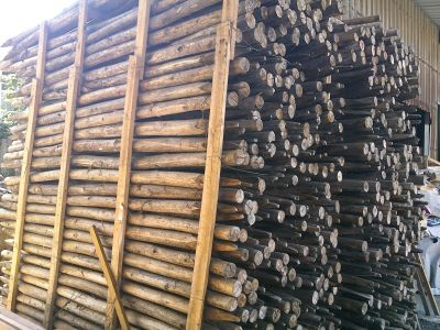樹木支架 樹支架 支撐 柏油焦油木樁 (最小端直徑4~5*180cm) 500根